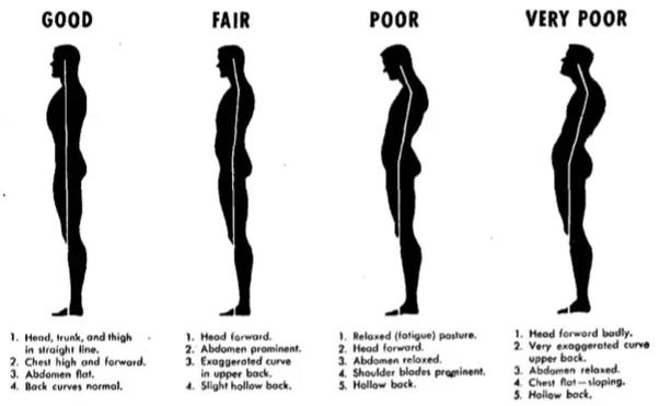 فرم بدن