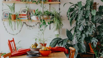 Photo of بهترین گیاهان و گل های آپارتمانی برای نگهداری در منزل