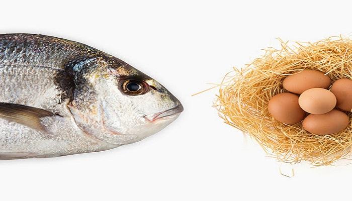 تخم مرغ و ماهی منبع مهمی در تامین ویتامین D می باشد.
