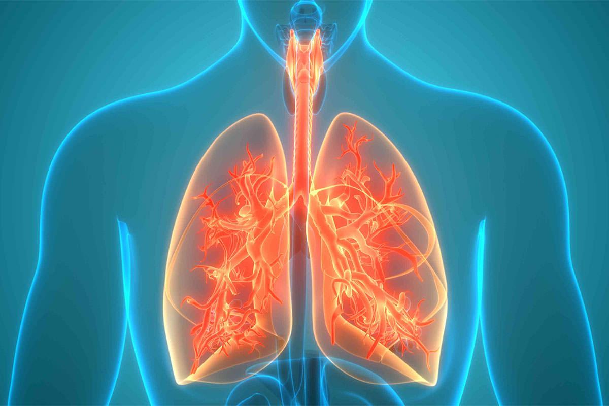 فواید شلغم را در سفواید شلغم در سلامت سیستم تنفسی انسان نیز کاربرد دارد