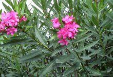 Photo of آنچه لازم است درباره گیاهان سمی بدانید!