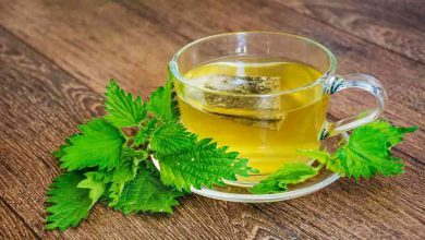 Photo of آنچه لازم است درباره خواص و کاربرد چای گزنه بدانید!