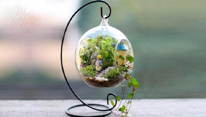 پرورش گیاه کالیسیا در تراریوم