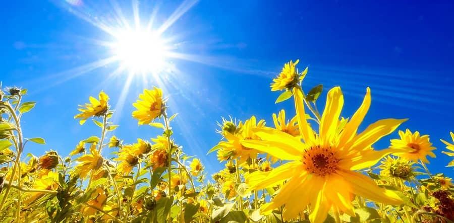 کمبود کلسیم بدن خود را با نور خورشید جبران کنید