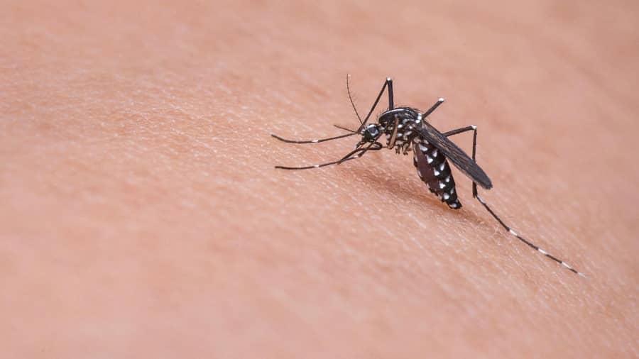 خلاص شدن از شر نیش حشرات