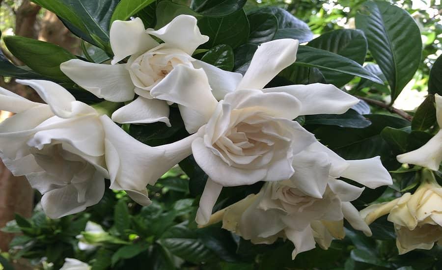 برای درمان آرتروز زانو از بوییدن گیاهان خوش بو غافل نشوید