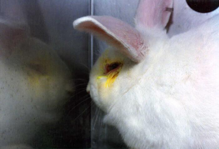 آزمایش حیوانات برای محصولات آرایشی