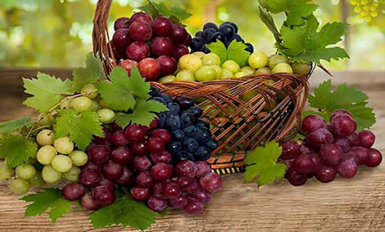 Photo of بهترین خواص انگور قرمز برای پوست، مو و سلامتی