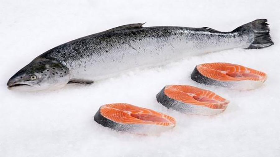 طرز تهیه ماهی سالمون.
