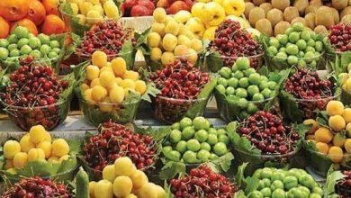 Photo of میوههای تابستانه و نوبرانه، فعلا گران و بیکیفیت