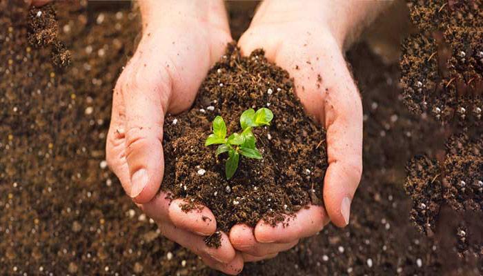 خاک رس برای کاشت گل و گیاه مناسب می باشد.