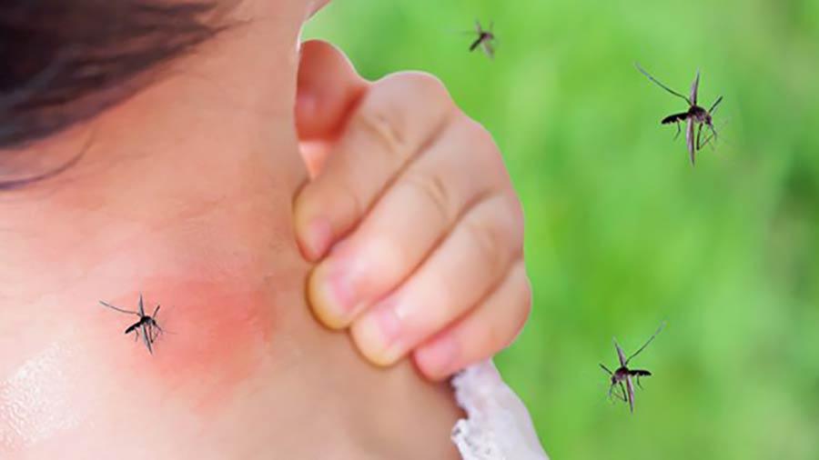 انتقال بیماری با پشه.