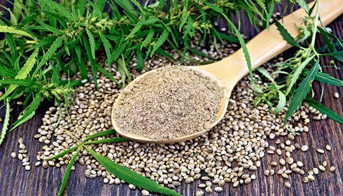 مصرف دانه های شاهدانه برای سلامت قلب، گوارش و پوست افراد مفید است
