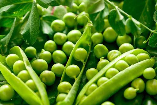 نخود سبز، یک ماده غذایی حاوی پروتئین